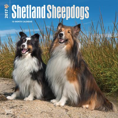 Shetland Sheepdogs - 2017 Calendar Calendars