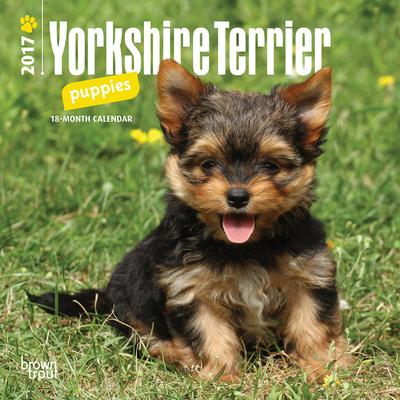 Yorkshire Terrier Puppies - 2017 Mini Calendar Calendars
