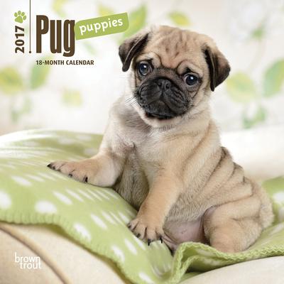 Pug Puppies - 2017 Mini Calendar Kalendarze