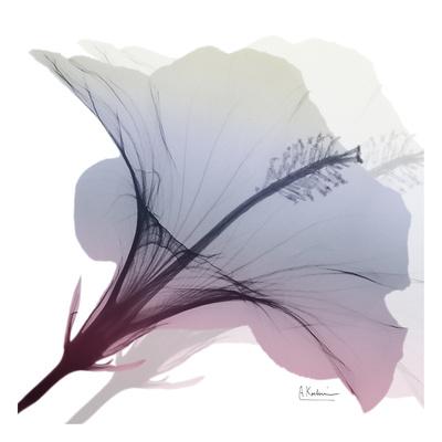 Tasty Grape Hibiscus 2 Prints by Albert Koetsier