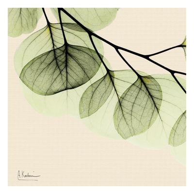 Mint Eucalyptus 3 Prints by Albert Koetsier