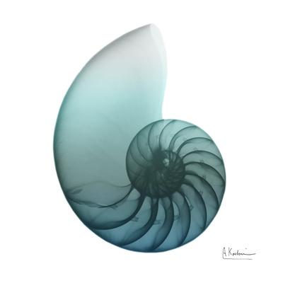 Water Snail 4 Print by Albert Koetsier