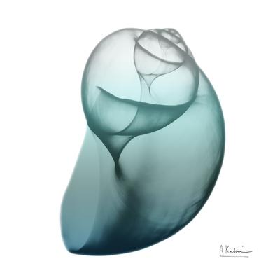 Water Snail 3 Prints by Albert Koetsier
