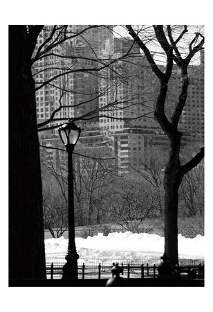 Central Park Concrete Forest Prints by Jeff Pica