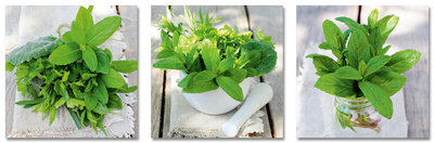 Fresh Green Herbs In Summer Kunst på glas