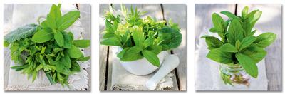 Fresh Green Herbs In Summer Cam Sanatı