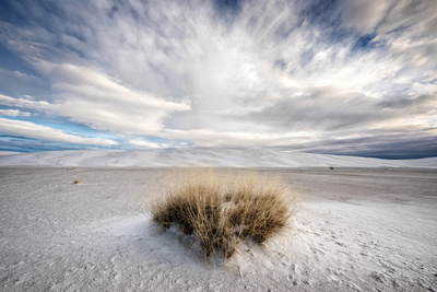 A Grass Mound in a Barren Desert in USA Photographic Print by Jody Miller