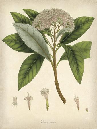 Vintage East Indian Plants V Poster by Maria Mendez