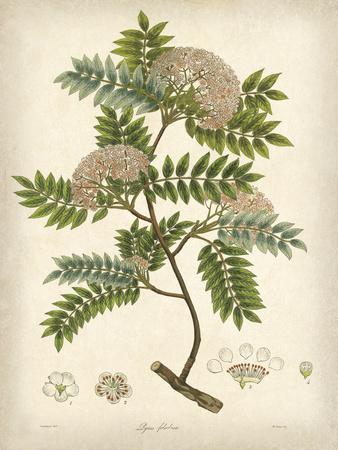 Vintage East Indian Plants VI Prints by Maria Mendez