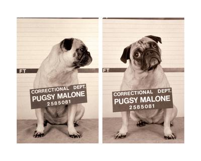 Pugsy Malone Giclee Print by Jim Dratfield