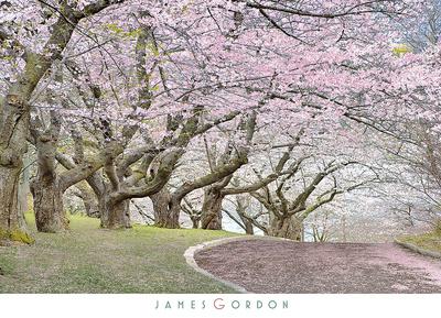Blossom Hill Prints by James Gordon