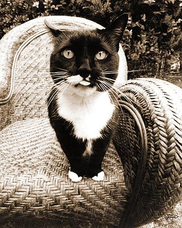 Kitty I Print by Jim Dratfield