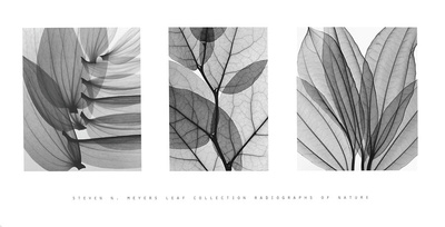 Leaf Collection Prints by Steven N. Meyers