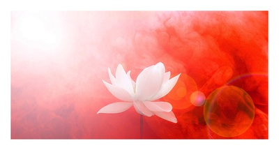 Lotus in Flames Prints by Bahman Farzad