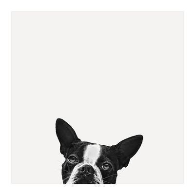 Loyalty Posters by Jon Bertelli