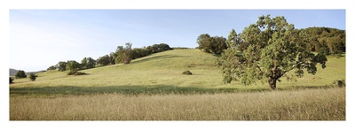Oak Tree Pano 99 Prints by Alan Blaustein