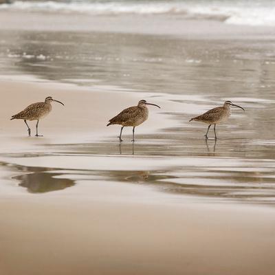 Shore Birds II Art by Danita Delimont