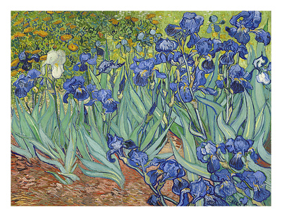 Irises, 1889 Poster by Vincent van Gogh