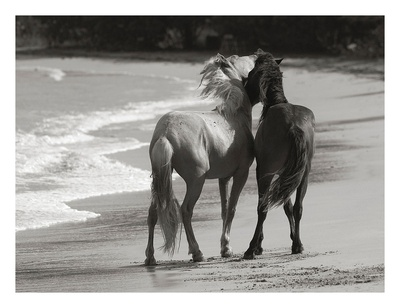 Young Mustangs on Beach Prints by Traer Scott