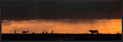 Lion Hunting, Masai-Mara, Kenya Poster by Michel & Christine Denis-Huot