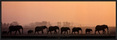 Troupeau d'Elephants Prints by Michel & Christine Denis-Huot