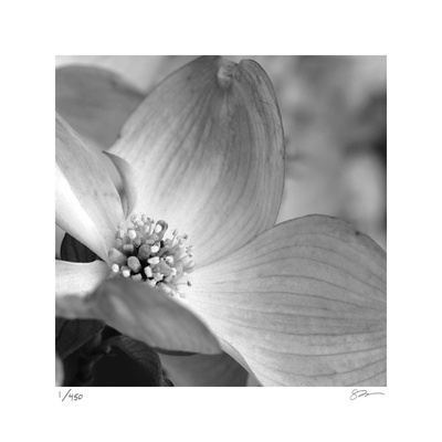 Botanical Study 9 Limited Edition by Stacy Bass