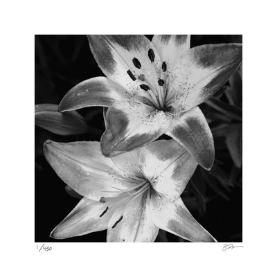Botanical Study 5 Limited Edition by Stacy Bass