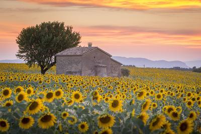 Provence, Valensole Plateau, France Photographic Print by Francesco Riccardo Iacomino