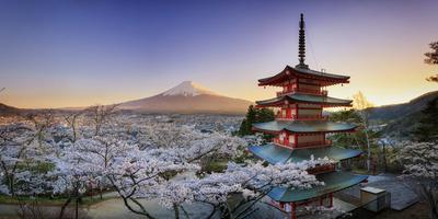 Japan, Yamanashi Prefecture, Fuji-Yoshida, Chureito Pagoda, Mt Fuji and Cherry Blossoms Photographic Print by Michele Falzone