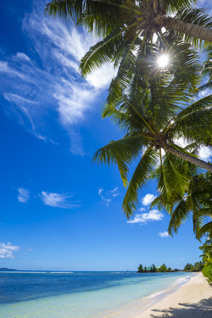 Palm Trees and Tropical Beach, La Digue, Seychelles Photographic Print by Jon Arnold