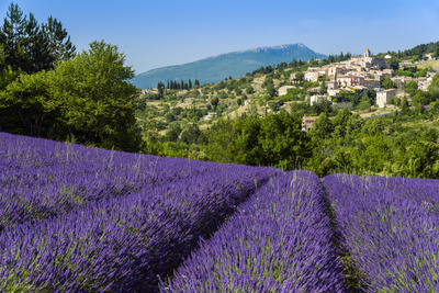 View of Village of Aurel with Field of Lavander in Bloom, Provence, France Photographic Print by Stefano Politi Markovina