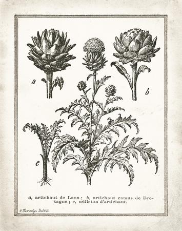 French Artichokes Kunstdruck von Gwendolyn Babbitt