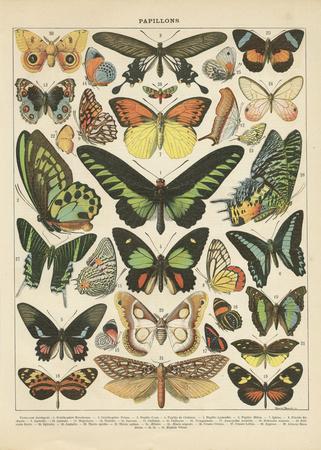 SchmetterlingeII Kunstdrucke von Gwendolyn Babbitt