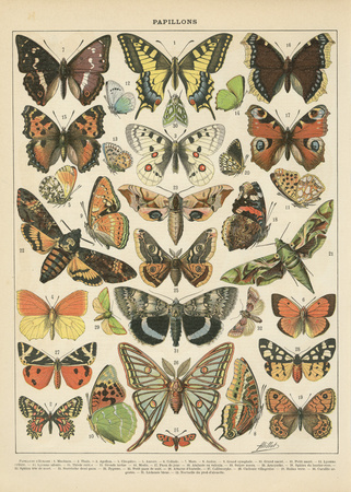 Papillons 1 Poster von Gwendolyn Babbitt