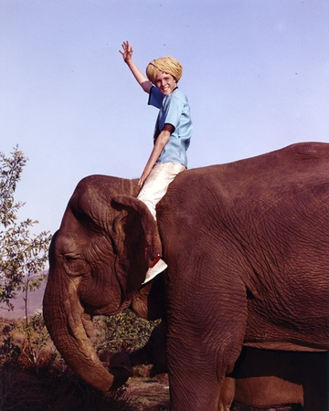 Jay North Riding on Elephant in Blue Short Sleeve Shirt with Right Hand Raised Up Waving Photo by  Movie Star News