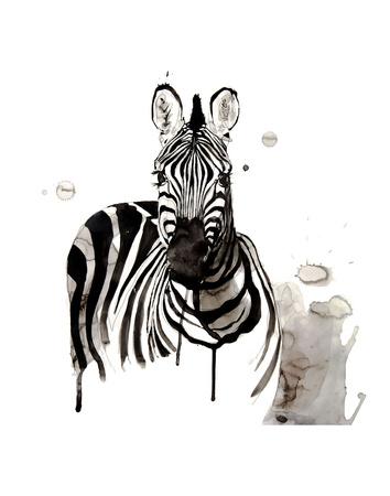 Zebra I Reprodukcja