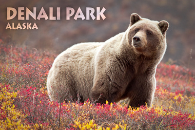 Denali Park, Alaska - Grizzly Bear and Colorful Meadow Flowers Posters by  Lantern Press