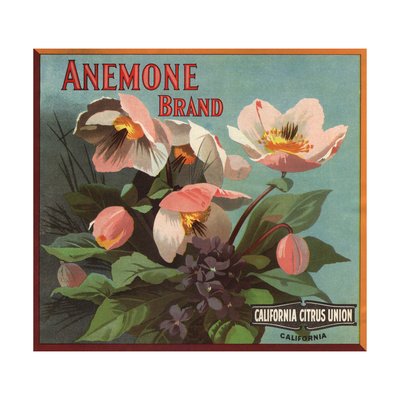 Anemone Brand - California - Citrus Crate Label Poster by  Lantern Press