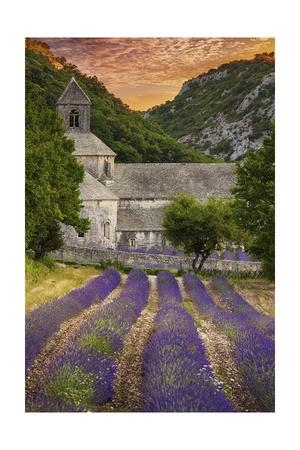 Provence, France - Lavender Fields Posters by  Lantern Press