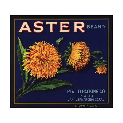 Aster Brand - San Bernardino, California - Citrus Crate Label Prints by  Lantern Press