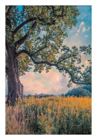 Where I Daydream Posters by John Rivera
