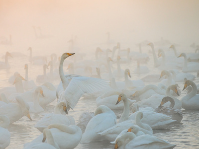 Song of the Morning Light Photographic Print by Dmitry Dubikovskiy