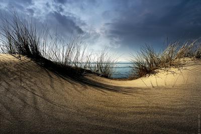 Dunes Photographic Print by Wim Schuurmans