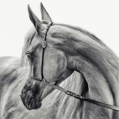 The Arabian Horse Photographic Print by Piet Flour