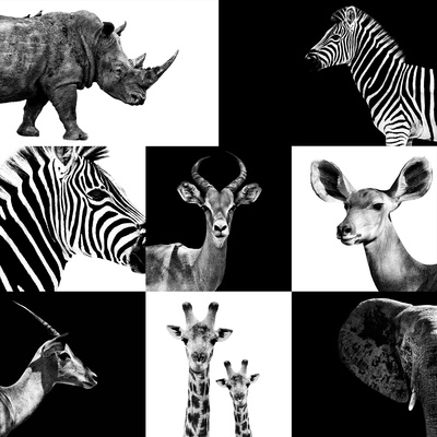 Safari Profile Collection Photographic Print by Philippe Hugonnard