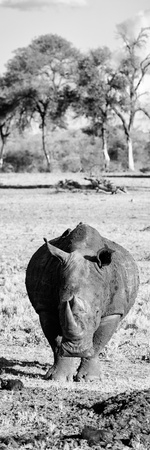 Awesome South Africa Collection Panoramic - Black Rhino B&W Fotografisk tryk af Philippe Hugonnard