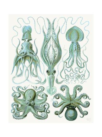 Turquoise Octopus and Squid b Art by Fab Funky