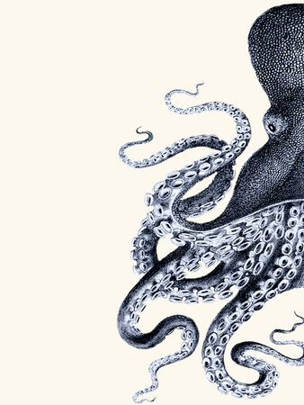 Octopus Indigo Blue and Cream a Prints by Fab Funky