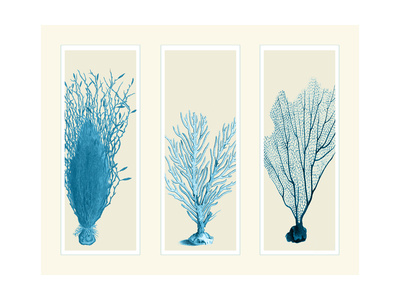 Blue Corals on 3 Panels Posters by Fab Funky
