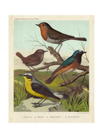Robin, Wren & Redstart Poster di  Cassell